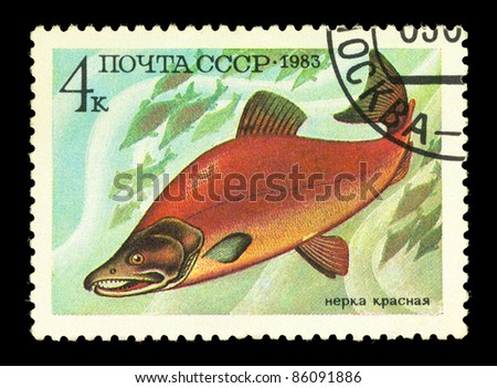 USSR - CIRCA 1983: A stamp printed in the USSR showing salmon circa 1983