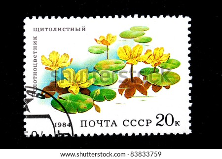USSR - CIRCA 1984: A stamp printed in the USSR showing Spatterdock, circa 1984