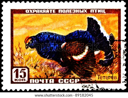 USSR- CIRCA 1957:  A stamp printed in the USSR shows a Black Grouse, Tetrao tetrix in a field.  Also known as Blackgame, circa 1957.