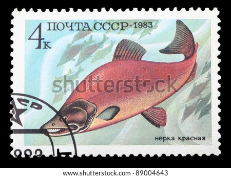 USSR - CIRCA 1983: A stamp printed in the USSR shows Sockeye salmon - Oncorhynchus nerka, circa 1983