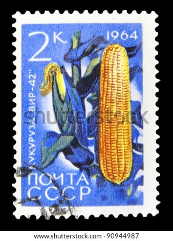 """USSR - CIRCA 1964: A stamp printed in USSR (Russia) shows a agricultural crop with the inscription """"Maize (Zea mays)"""" from the series """"Agricultural crops bred by Soviet scientists"""", circa 1964"""