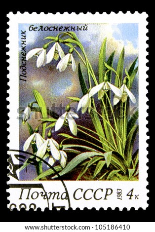 "USSR - CIRCA 1983: A stamp printed in USSR (Russia) shows a Snowdrops with the inscription ""Galanthus nivalis"", from the series ""Spring Flowers"", circa 1983"