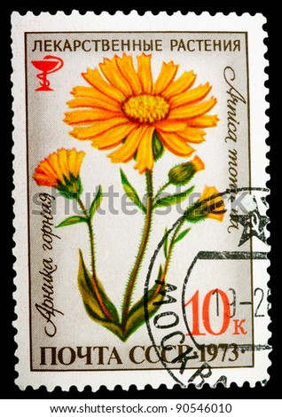 USSR - CIRCA 1973: A stamp printed in USSR shows a Arnica montana, herb series, circa 1973 - stock photo