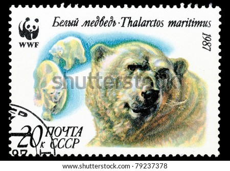 USSR - CIRCA 1987: A stamp printed in USSR shows animal Polar bear, circa 1987