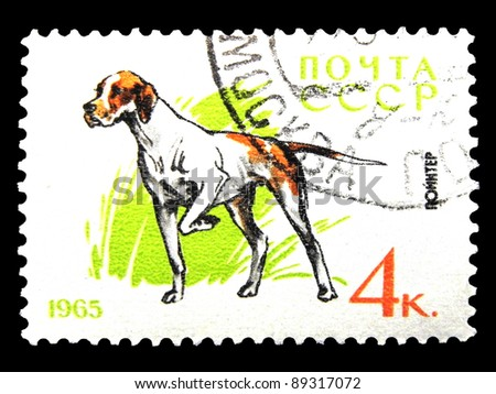 """USSR - CIRCA 1965: A stamp printed in USSR shows dogs with the inscription """"Pointer"""" from the series """"Service and hunting dogs"""", circa 1965"""