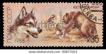 USSR - CIRCA 1988: A stamp printed in USSR, shows East Siberian husky, bear hunt, series Hunting dogs, circa 1988