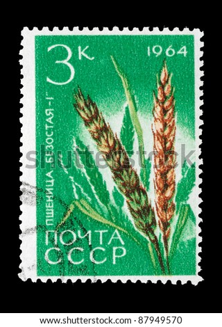 USSR - CIRCA 1964: A Stamp printed in USSR shows image of a wheat, circa 1964