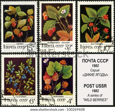 USSR - CIRCA 1982: A stamp printed in USSR, shows image of berry, series, circa 1982.