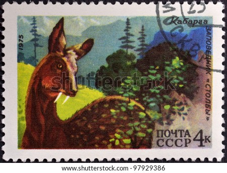 USSR - CIRCA 1975: A stamp printed in USSR shows Musk deer reserve Sgolbi, circa 1975