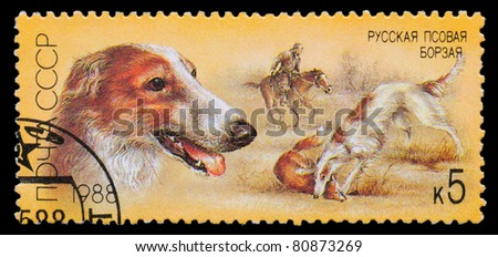USSR - CIRCA 1988: A stamp printed in USSR, shows Russian borzoi, fox hunt, series Hunting dogs, circa 1988