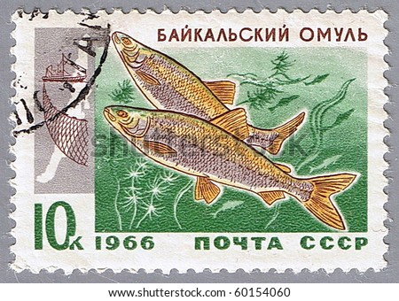 USSR - CIRCA 1966: A stamp printed in USSR shows two Baikal omul, series, circa 1966