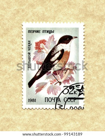 USSR - CIRCA 1981: Stamp printed in USSR shows songbirds, circa 1981