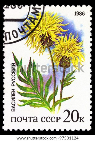 USSR - CIRCA 1986: The post stamp printed in the Soviet Union shows flower Cornflower Russian, circa 1986