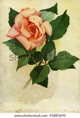 USSR - CIRCA 1959: Vintage postcards shows pink rose, Ukraine, circa 1959