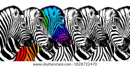 Usual & rainbow color zebra white background isolated, individuality concept, stand out from crowd, uniqueness symbol, independence, dissent, think different, creative idea, diversity, outstand, rebel Stock photo ©