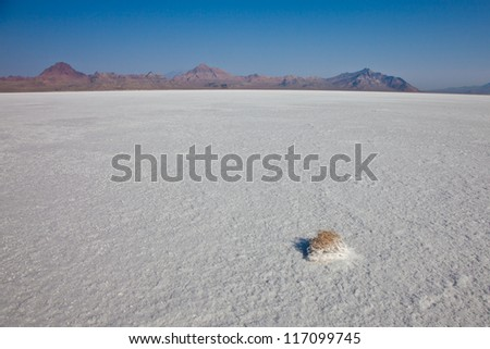 Utah Salt Flats with Small Tumble Weed in the Foreground