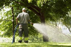 utility worker gardener of municipality  with hose for watering the plants and trees  in city park