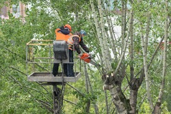 utility workers cut branches and trunks with chainsaws and overgrown trees dangerously hanging over residential buildings using a lifting platform for high-altitude work