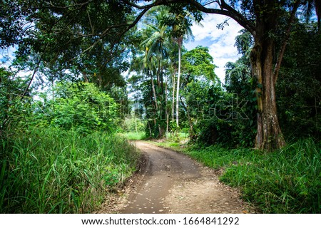 Uvita, Costa Rica. Ballena National Marine Park. Named after the Humpback Whales that migrate here each year from December to April to mate. Beautiful green road leading to the park. Foto stock ©