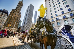 Vacant Horse and Carriage Near Central Park, Manhattan, New York
