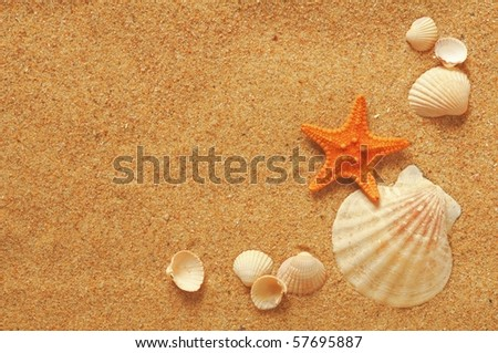 vacation memories from the beach, sea fish and shell