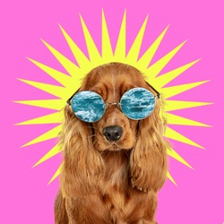 Vacation. Modern design. Contemporary art collage with cute dog and trendy colored background with geometric styled elements. Inspirative art, pets, animal, style and fashion concept. Copyspace.