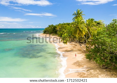 Vacation on the remote Caribbean sandy beach under the palms.