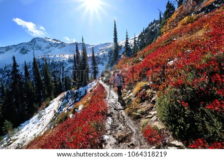 Vacation travel in Cascade Mountains. Young woman hiking along steep slope covered with red huckleberry bushes and snow in North Cascades National Park. Maple Pass. Seattle. Washington. United States. #1064318219