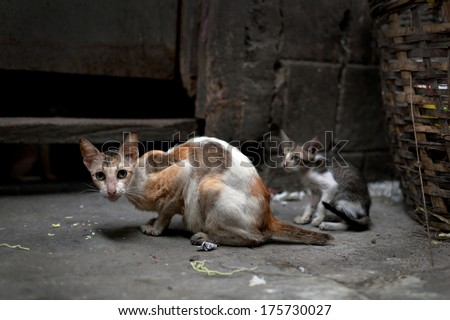 Vagrant cats. Homeless wild cats on dirty street in Asia