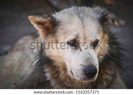 vagrant dog Dark brown hair #1163357371