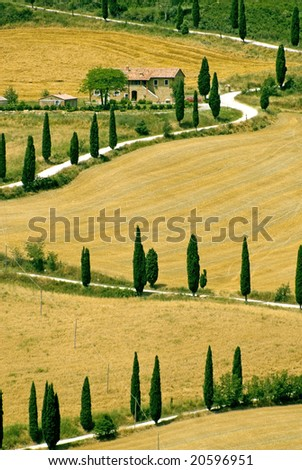 Val d'Orcia. The famous winding road with cypresses from la Foce to Castelluccio, near Siena (Tuscany, Italy) at summer