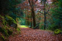 Val Masino forest autumnal shots, Val Masino, Sondrio, Italy