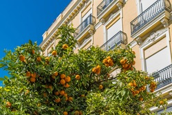 Valencia – Orange trees in front of a Art Nouveau building