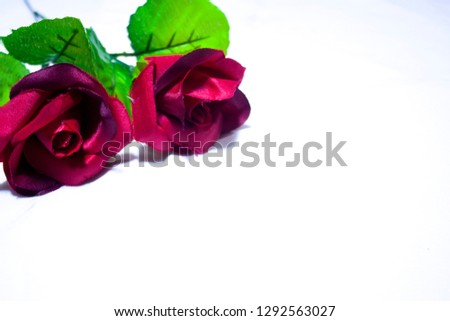Valentine day with roses photoshoot on white background