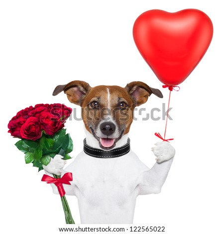 valentine dog  with a bunch of  red  roses and a red balloon