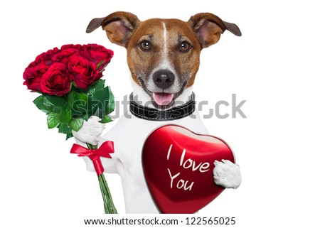 valentine dog  with a bunch of  red  roses and a red present box