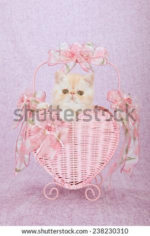 Valentine Exotic kitten sitting inside pink heart shape basket on pink background
