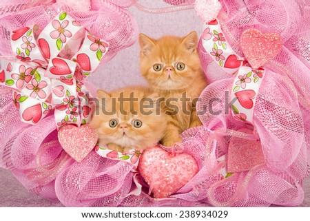 Valentine Exotic kittens sitting inside pink Valentine wreath on pink background