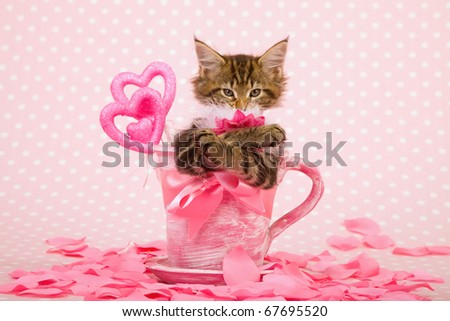 Valentine kitten in pink cup with hearts and rose petals
