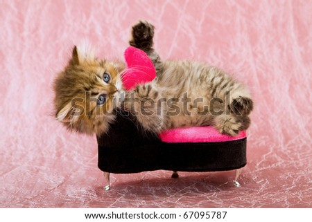 Valentine kitten on pink chair with small pink heart