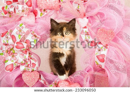 Valentine kitten sitting inside pink Valentine wreath on light pink background