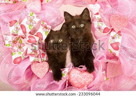 Valentine kittens sitting inside pink Valentine wreath on light pink background