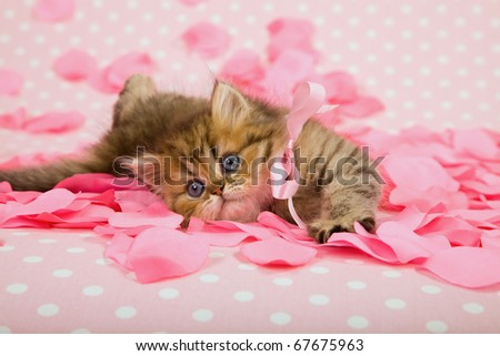 Valentine Mother Day kitten with pink rose petals