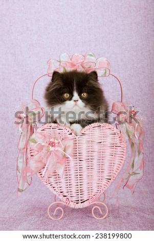 Valentine Persian kitten sitting inside pink heart shape Valentine basket on pink lilac background