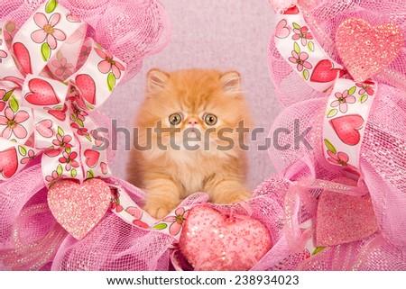 Valentine Persian kitten sitting inside pink Valentine wreath on pink background
