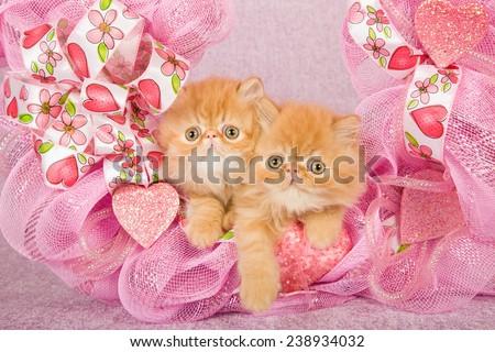 Valentine Persian kittens sitting inside pink Valentine wreath on pink background