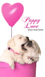 Valentine puppies and pink heart balloon.
