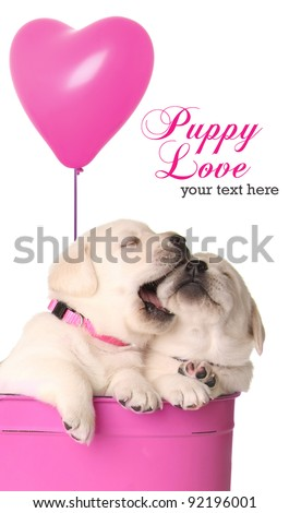 Valentine puppies and pink heart balloon. - stock photo