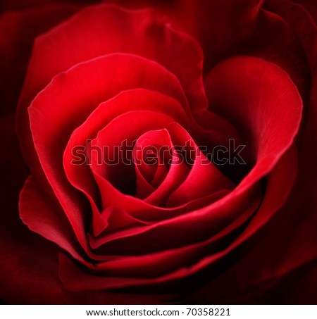 Valentine Red Heart Rose