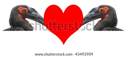 Valentine's Day, a card.Two large images of horned ravens with the big red heart